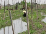 Myanmar 2013 © Agriversal Ltd