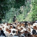 Pakistan 2011 © Agriversal Ltd