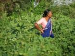 India 2009 © Agriversal Ltd