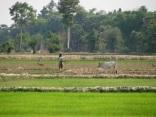 Cambodia 2010 © Agriversal Ltd